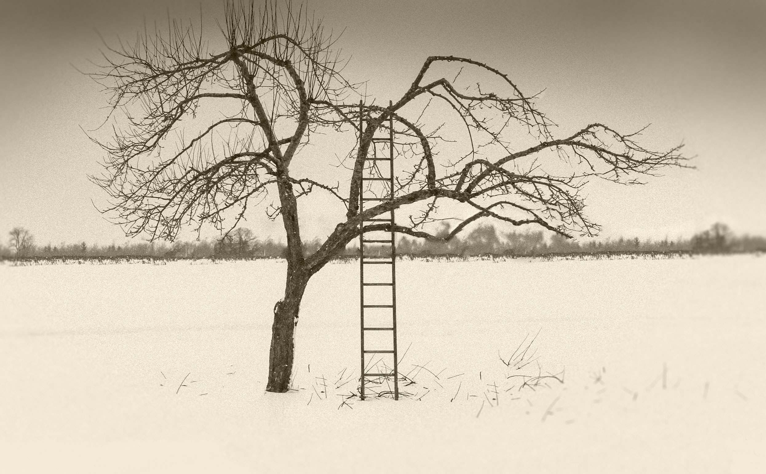 Tree and Ladder
