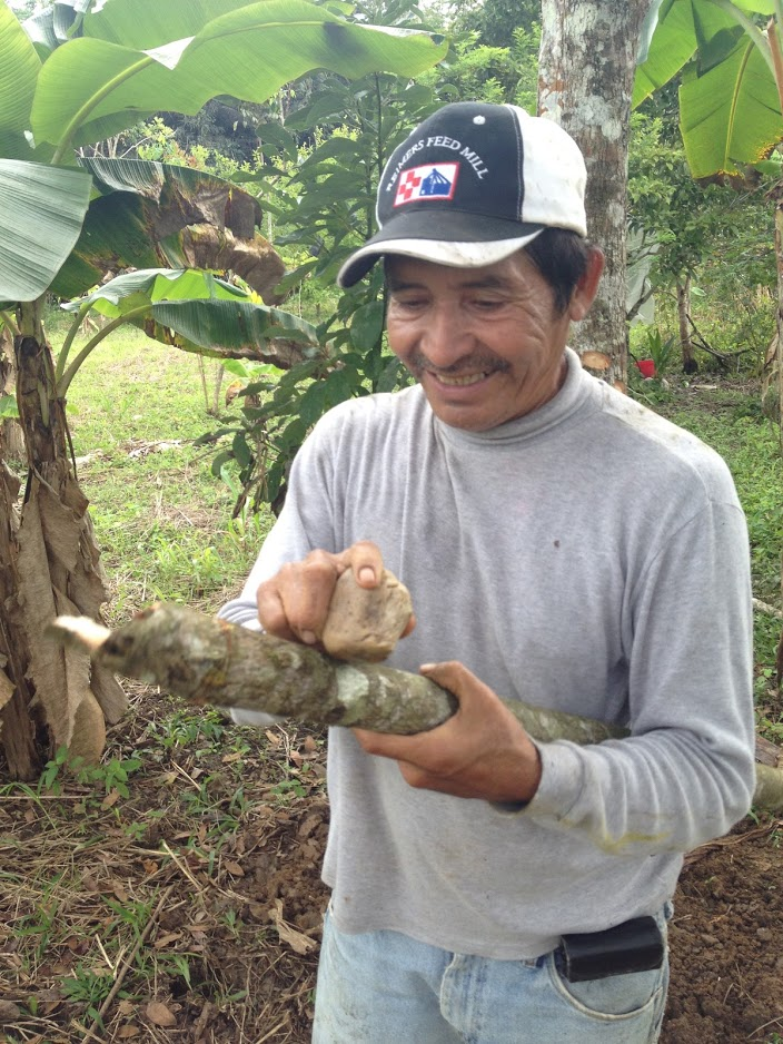 Narciso Torres - A joyous corn grower whose smile is wide and welcoming when walking his land