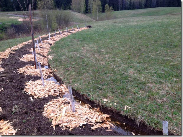 Setting-Permaculture-Farm-21.jpg