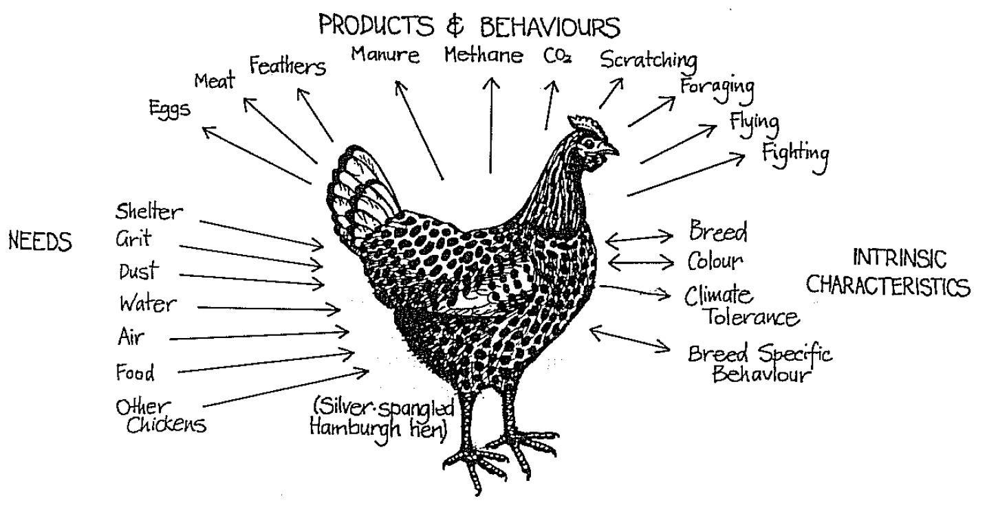 permaculture_chicken.jpg