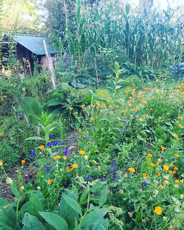 Abundance! * * * Here's to the beauty of community food. * * * #permaculture #permacultura #permaculturegarden #portlandpermaculture #permaculturegardening #organicgardening #organic #portland #oregongrown