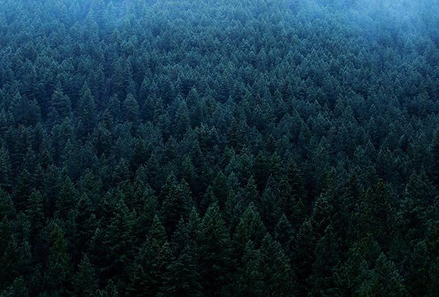The Sea of Trees Sometimes the only way to find yourself is to get lost. #pine #trees #mountain #hike #travel #explore #discover #adventure #getlost #looseyourself #erie #dark #darkness #cold #tree #pinetrees #forest #woods #fog #rain #rainydays #nature #wilderness #outdoors #getoutside #natureisbeautiful #landscape #landscapephotography #mg5k #ajwilliamsphoto