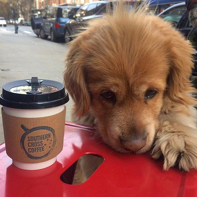 Who loves puppies and coffee?  Thanks @mohawksmoproblems for a great image!