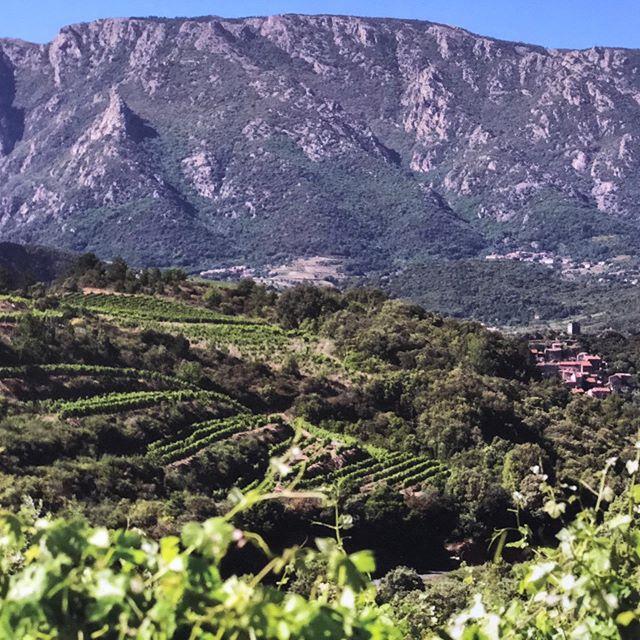 South of 🇫🇷 France Wine Country #wine #winecountry #winelover #weinberge #rotwein #rotweinwanderweg #redwine #redwine🍷 #frenchwinelover #travelblogger #reisefotos #reisefotografie #lifestyleblogger #lifestyle #lifestylephotography #sonoma #sonomacounty #sonomawine