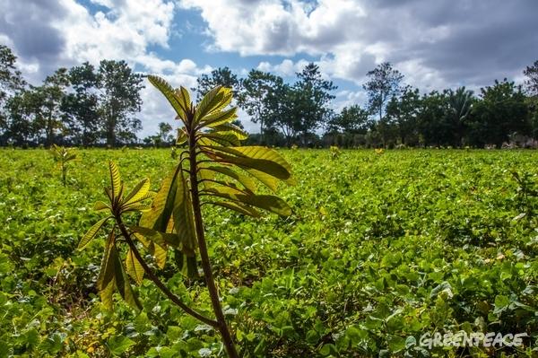 Ecological farming Finca Organopónica Cayo Piedra, Cuba, 14, January, 2017