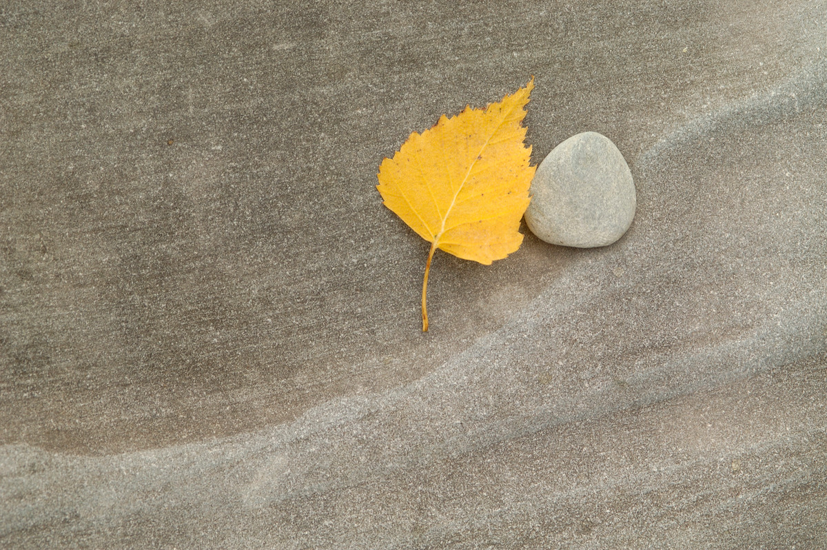 Yellow leaf next to a stone. © Markus Mauthe / Greenpeace