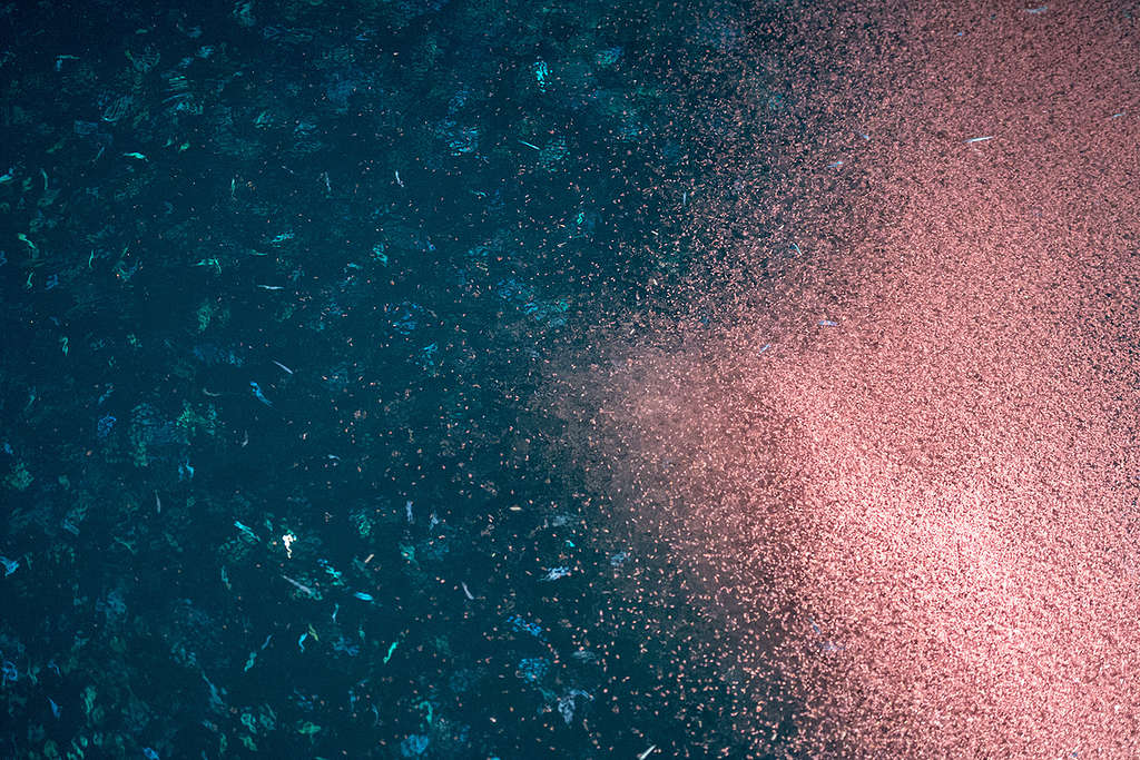 Certain Antarctic krill contribute as much biomass as humans © Andrea Izzotti / Thinkstock