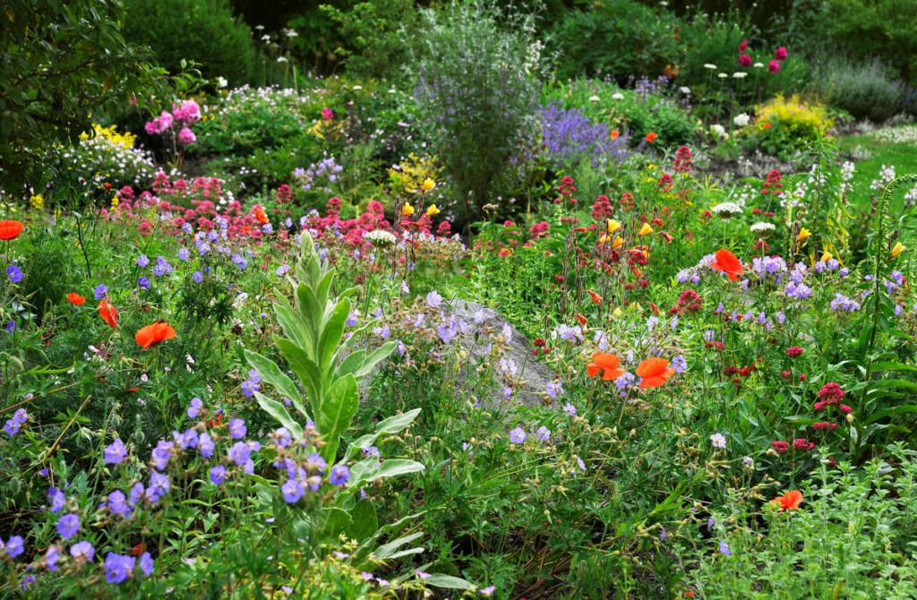 Bee friendly garden in Germany © Ute Klaphake / Greenpeace