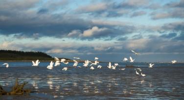 estuary_small.jpg