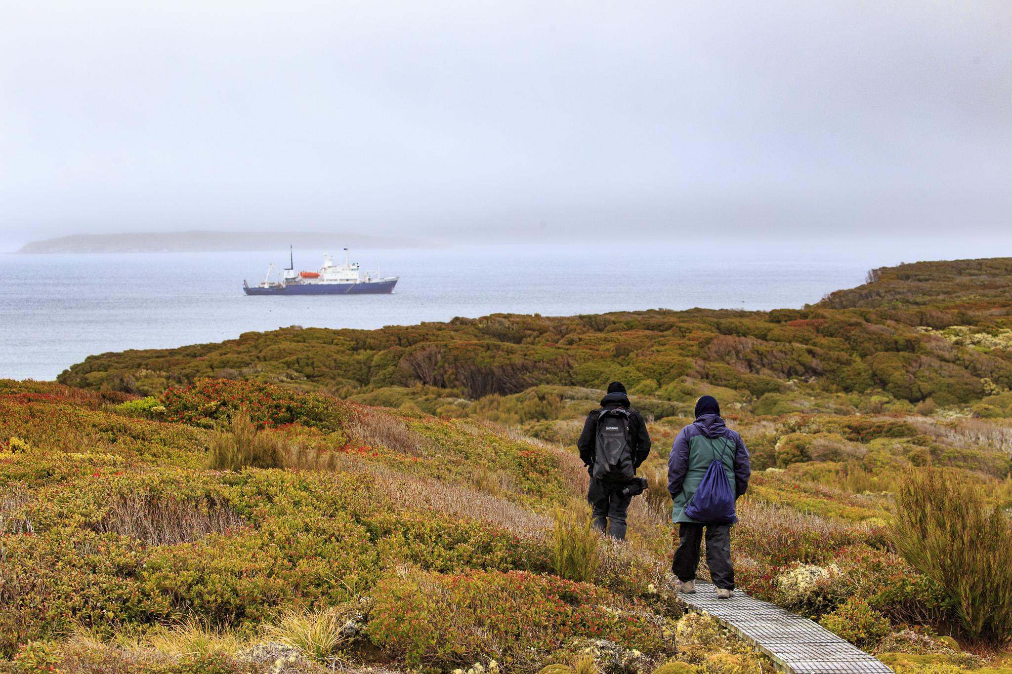 The boardwalk, Enderby Island