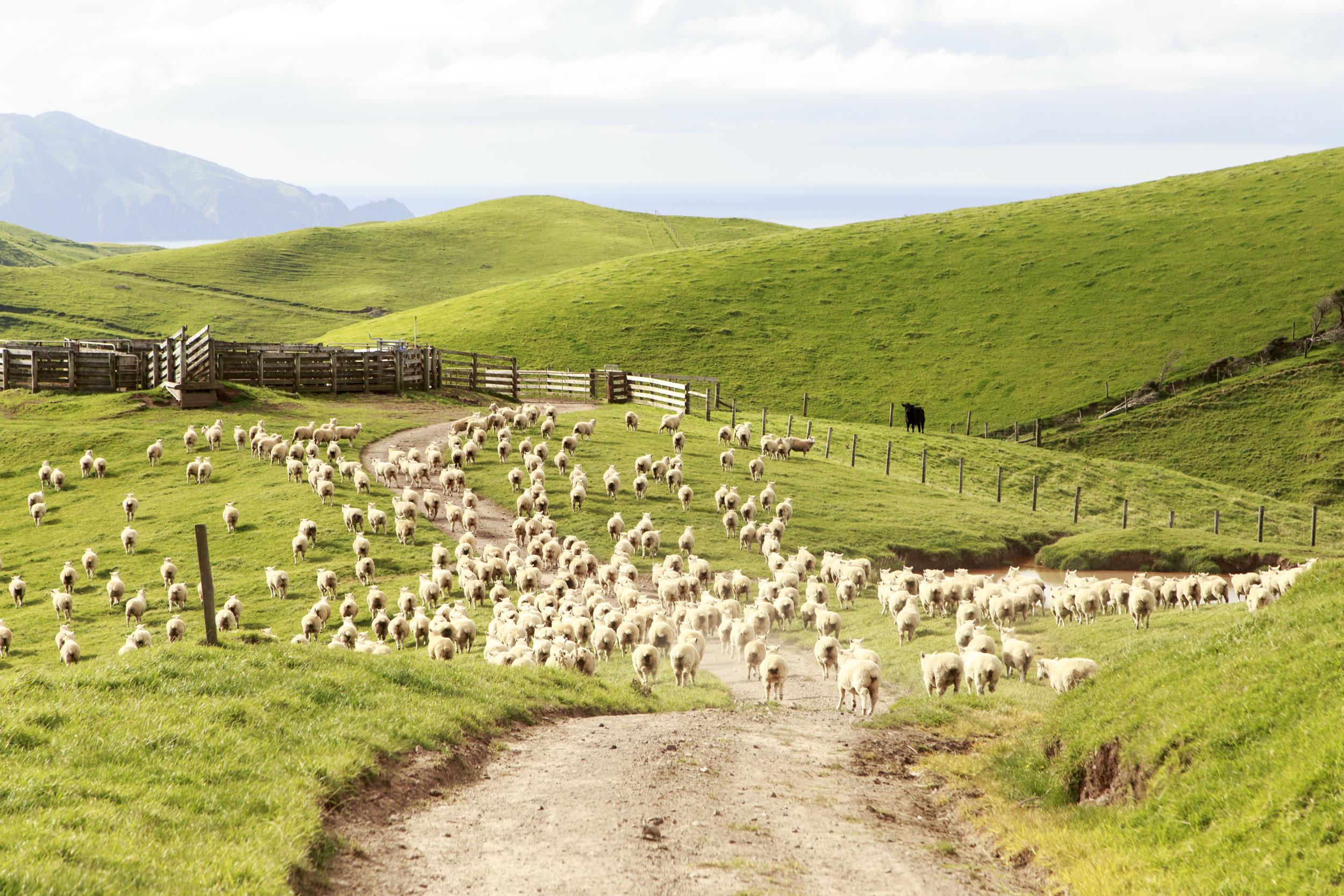 Farming - Island style.