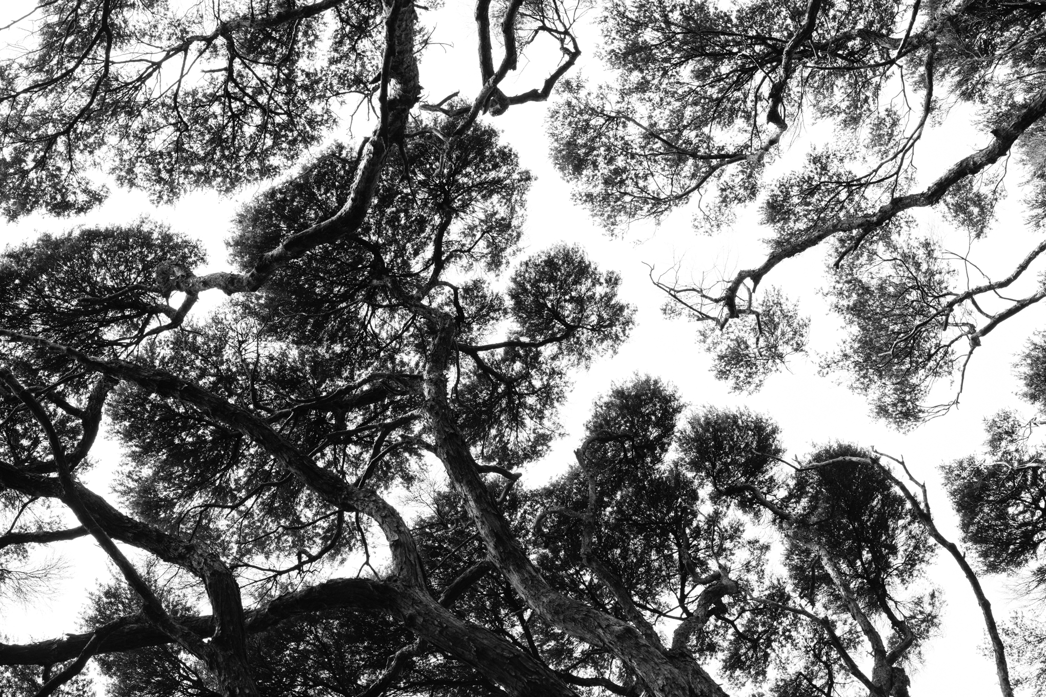 Always look up on Great Barrier Island