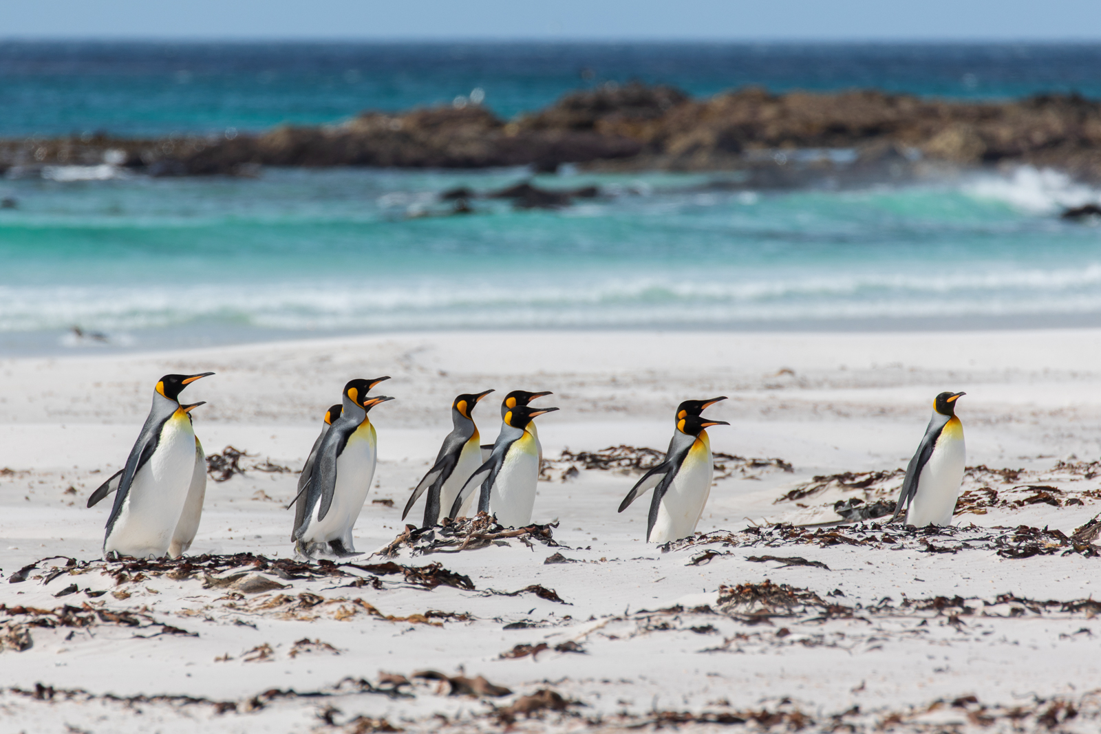 My first glimpse of the stunning beach and King Penguins