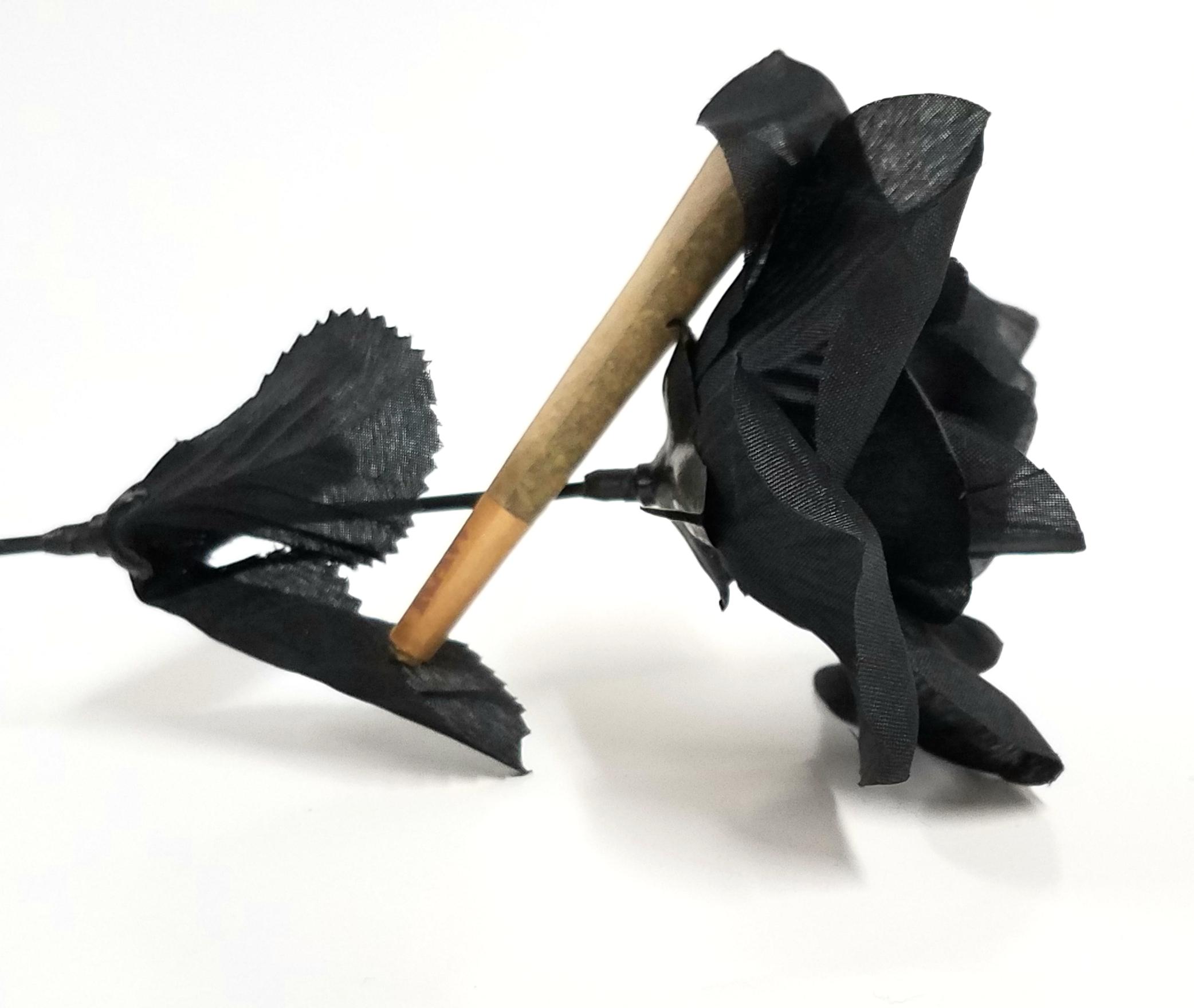 Black Sugar Rose