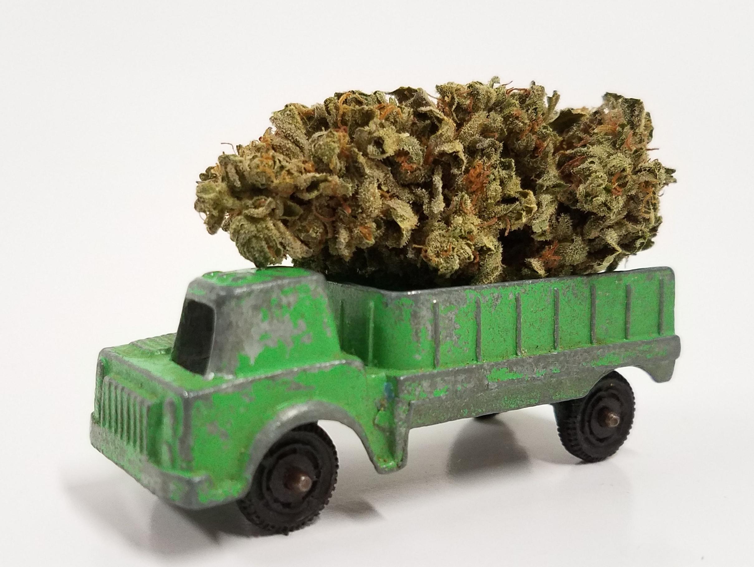 Tangieland grown by Cascade Valley Cannabis