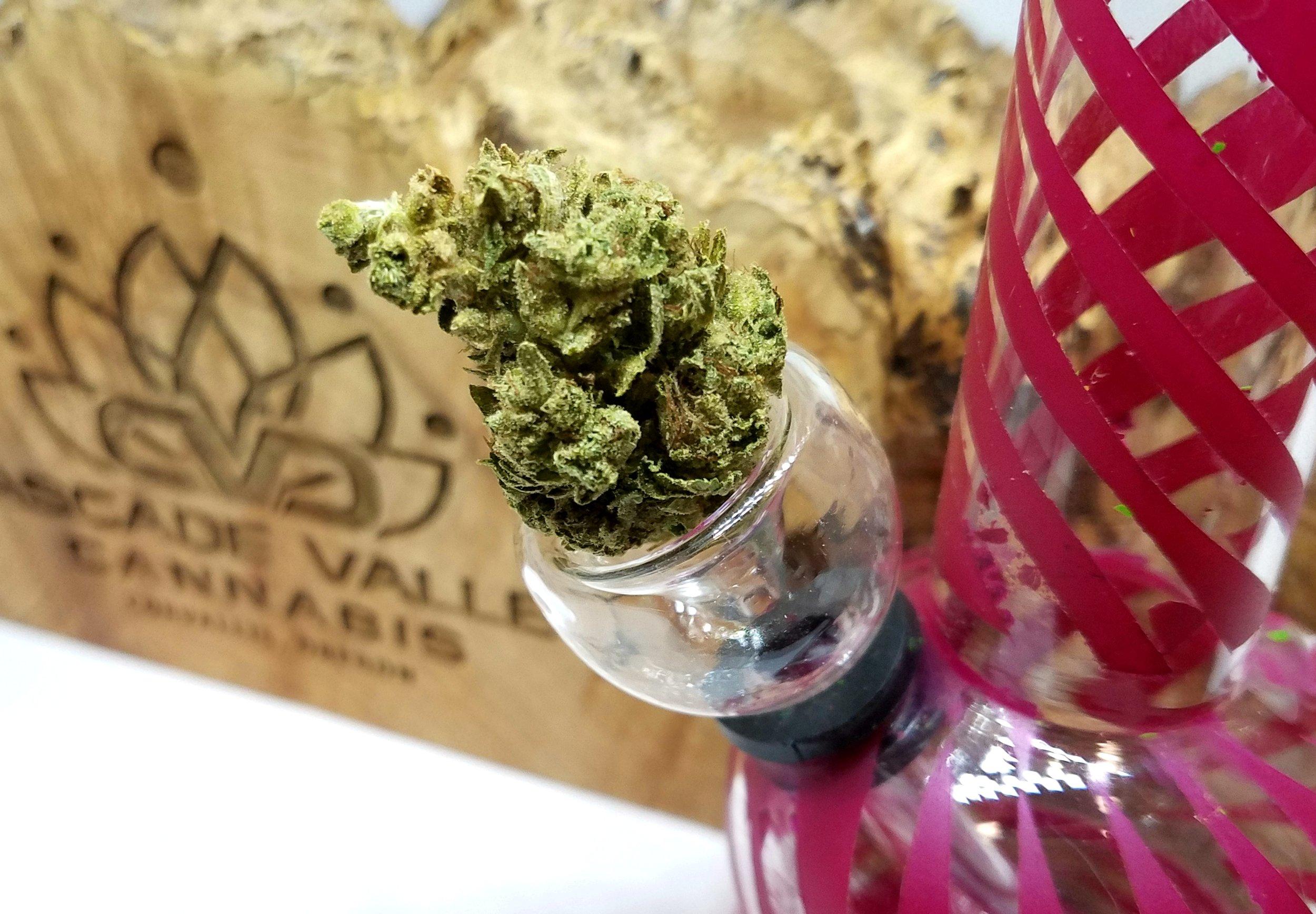 Trinidad OG grown by Cascade Valley Cannabis