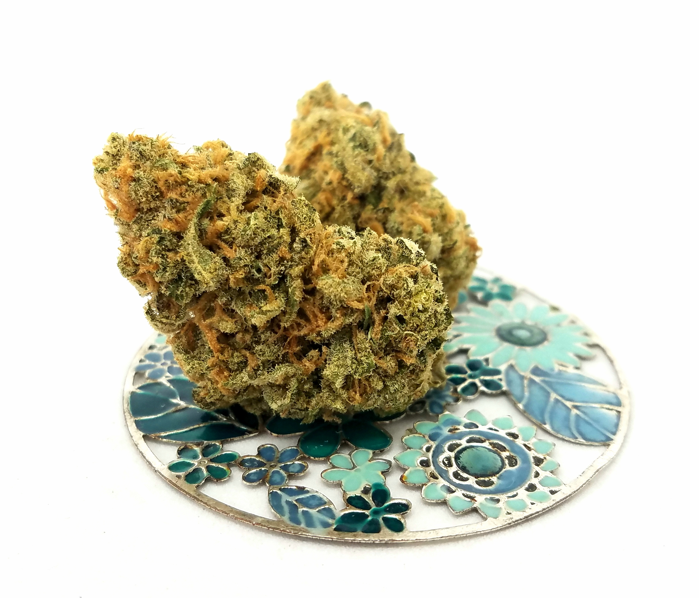 Super Silver Blue Magoo grown by Higher Minds Horticulture