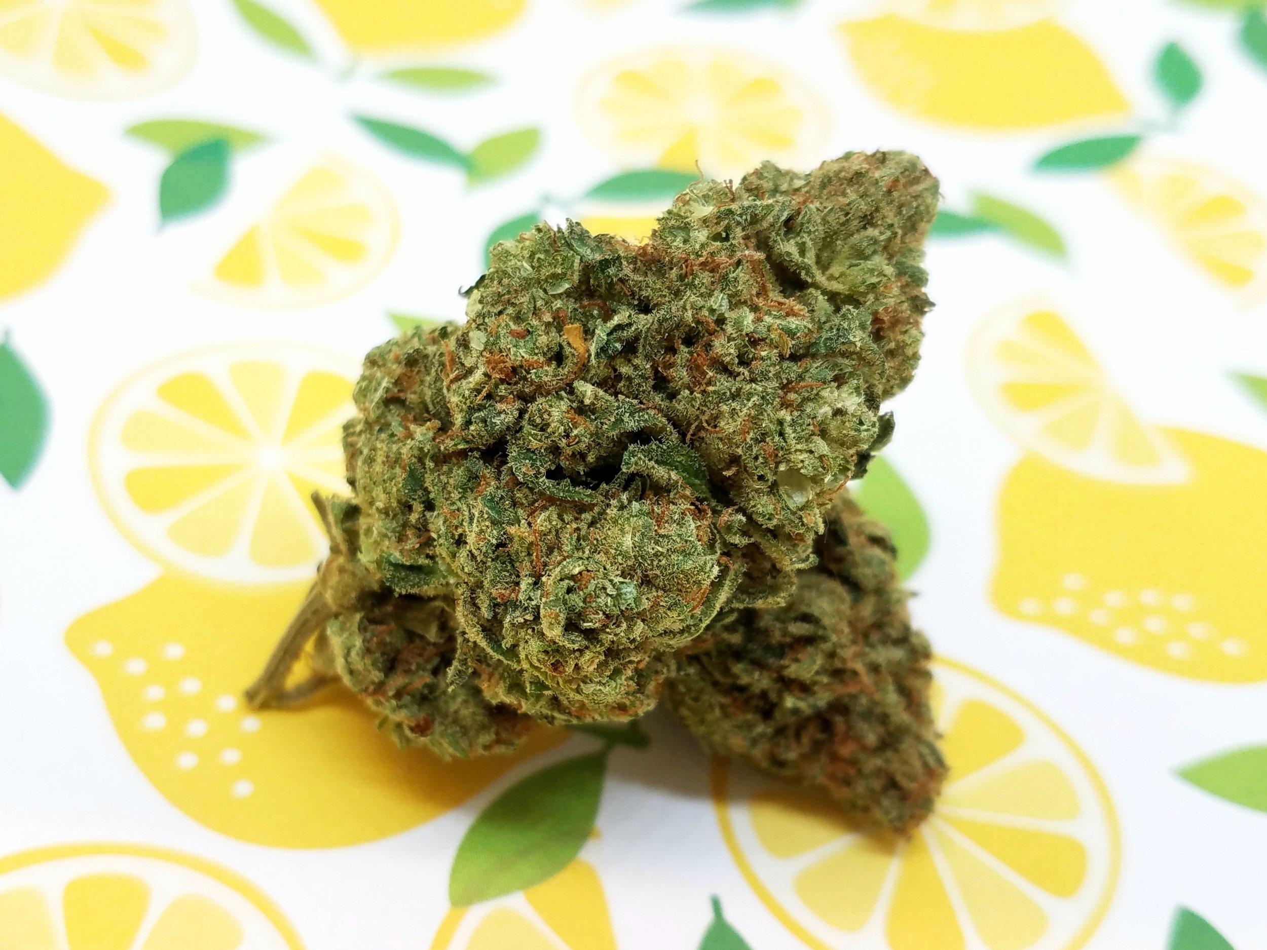Golden Lemons grown by Renegade Roots