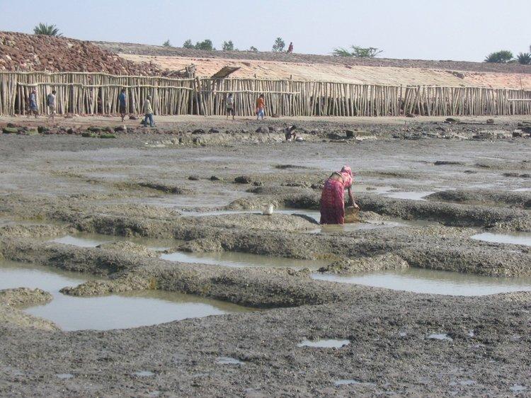 Deltas in the Anthropocene