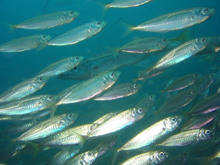 Climate Change Impacts: Fish, Fisheries and Fisheries Management