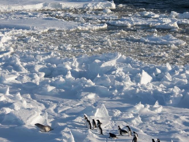 Amundsen Sea Wildlife