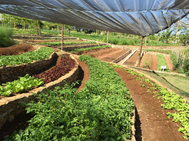 Cuba's Agrifood System in Transition