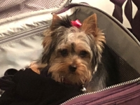 RUBY IS ALWAYS READY TO TRAVEL!!!