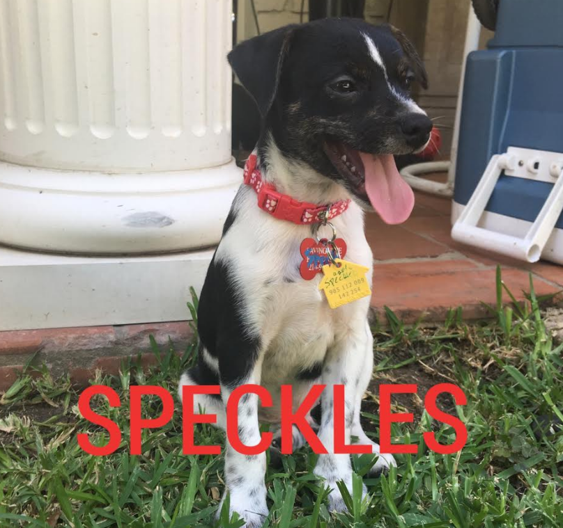 Speckles