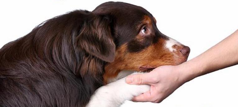 dog on hand.PNG