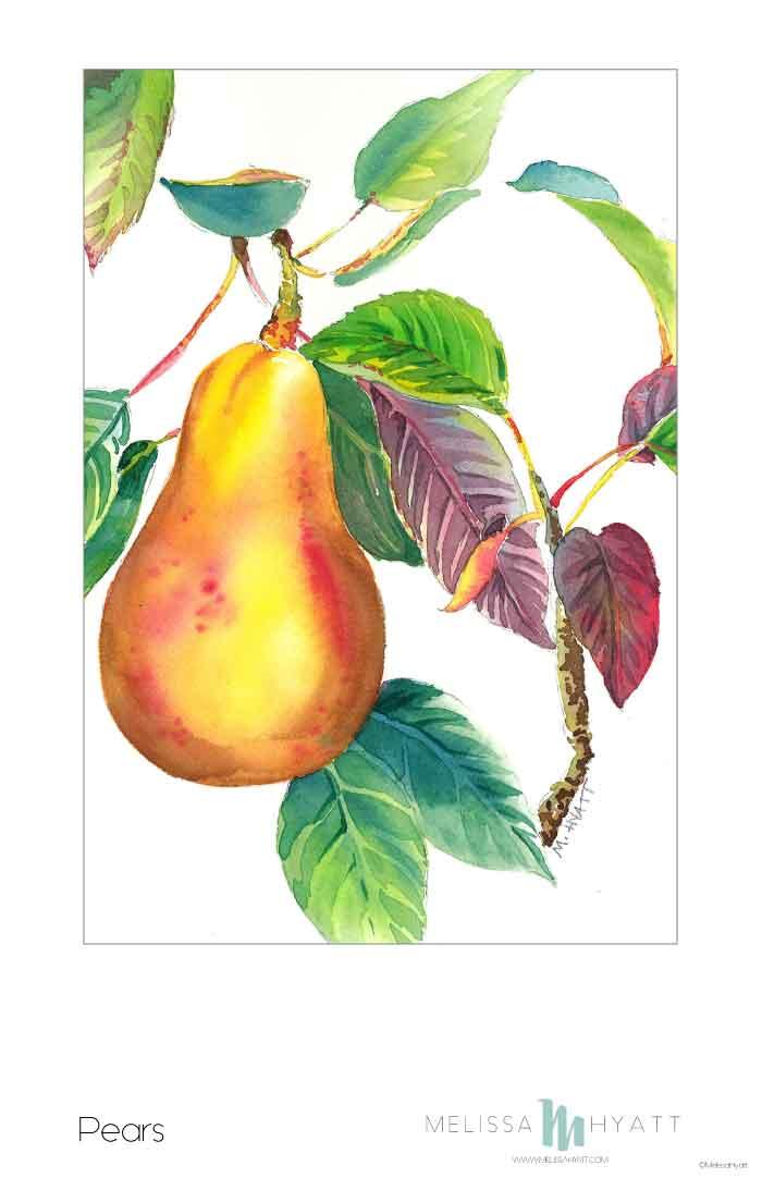MELISSAHYATT_pears.jpg