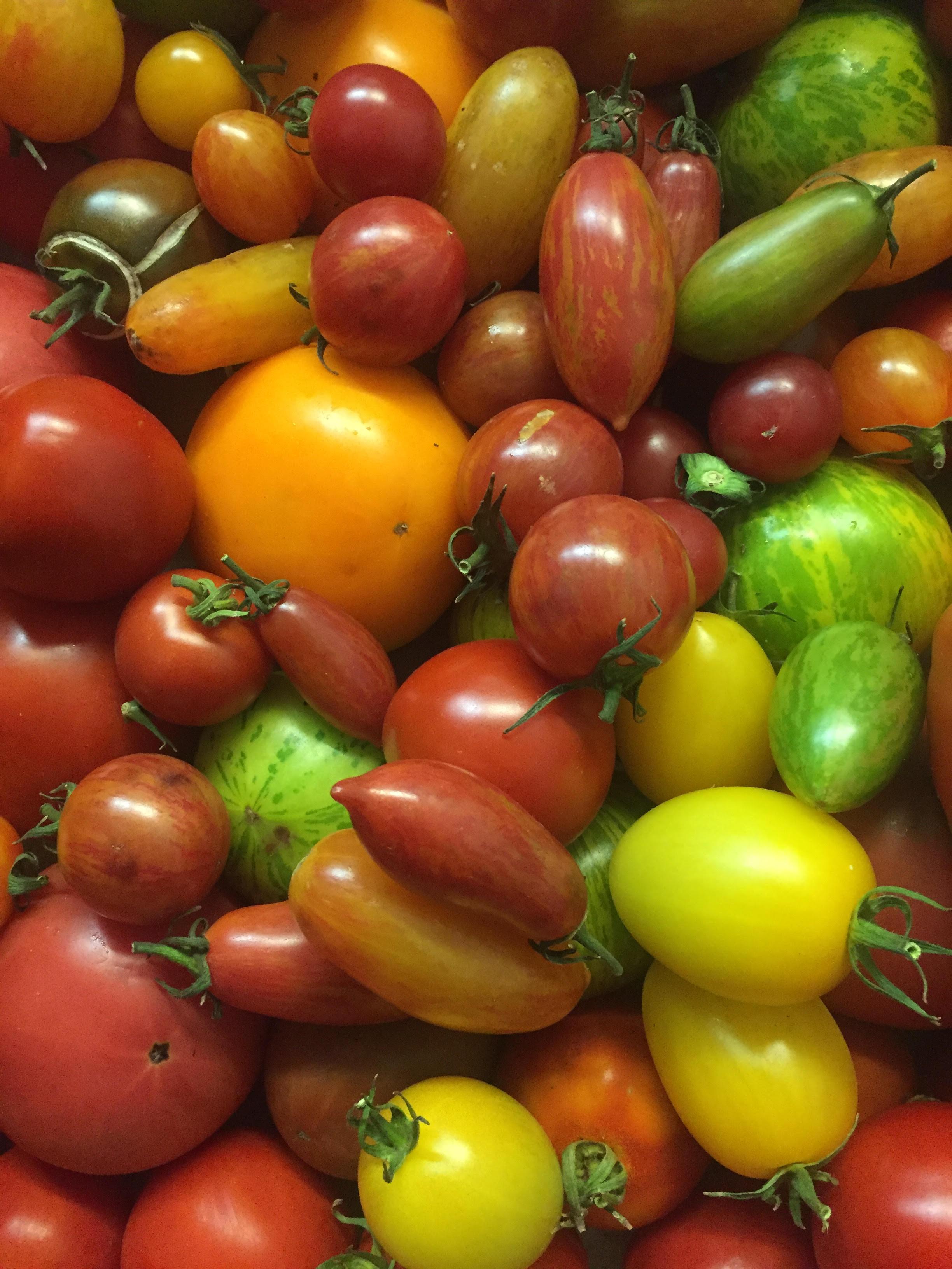 tomato3.jpg
