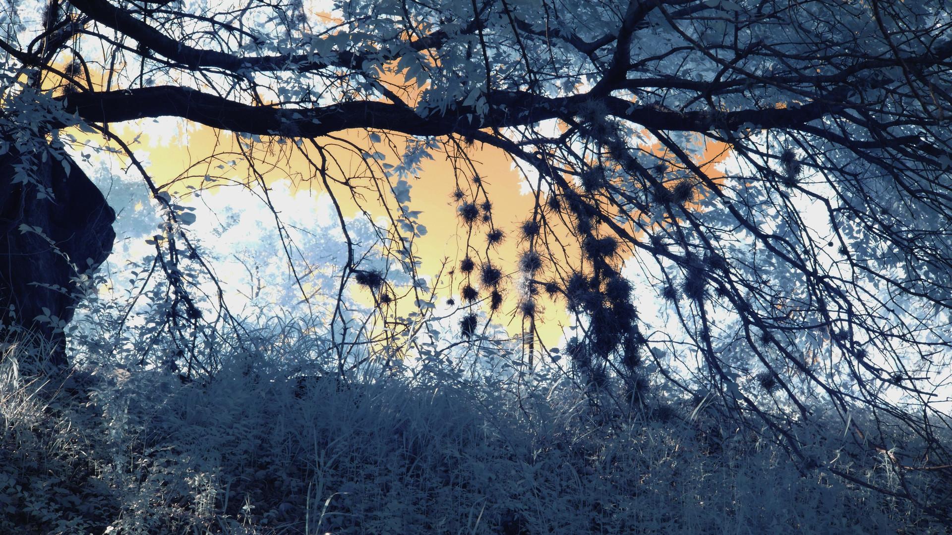 Tree_frame.jpg