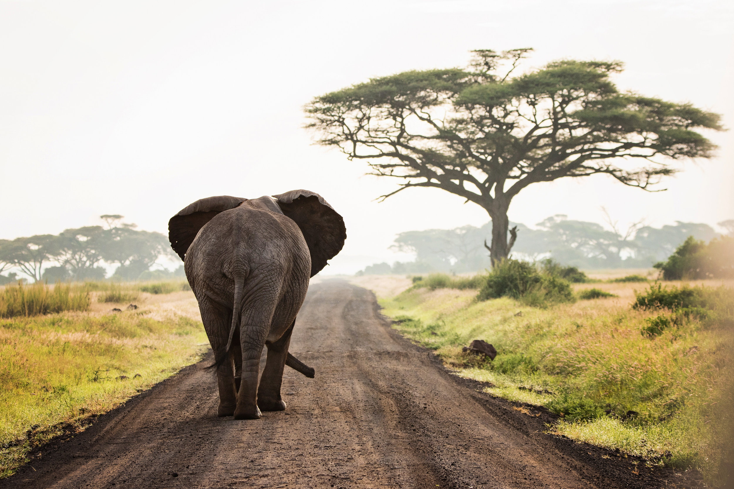 Kenya - January 2020