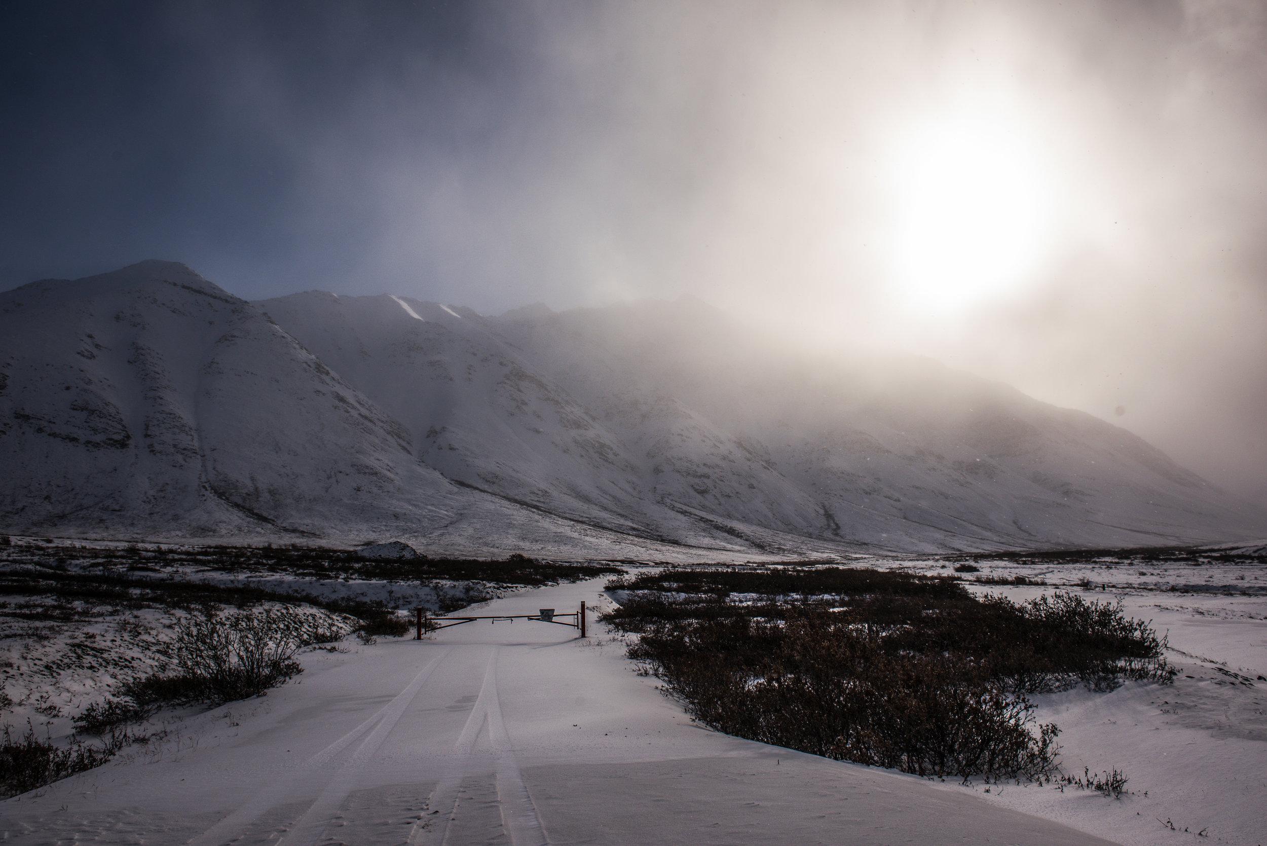 AlaskaPolarBear2015-76.jpg