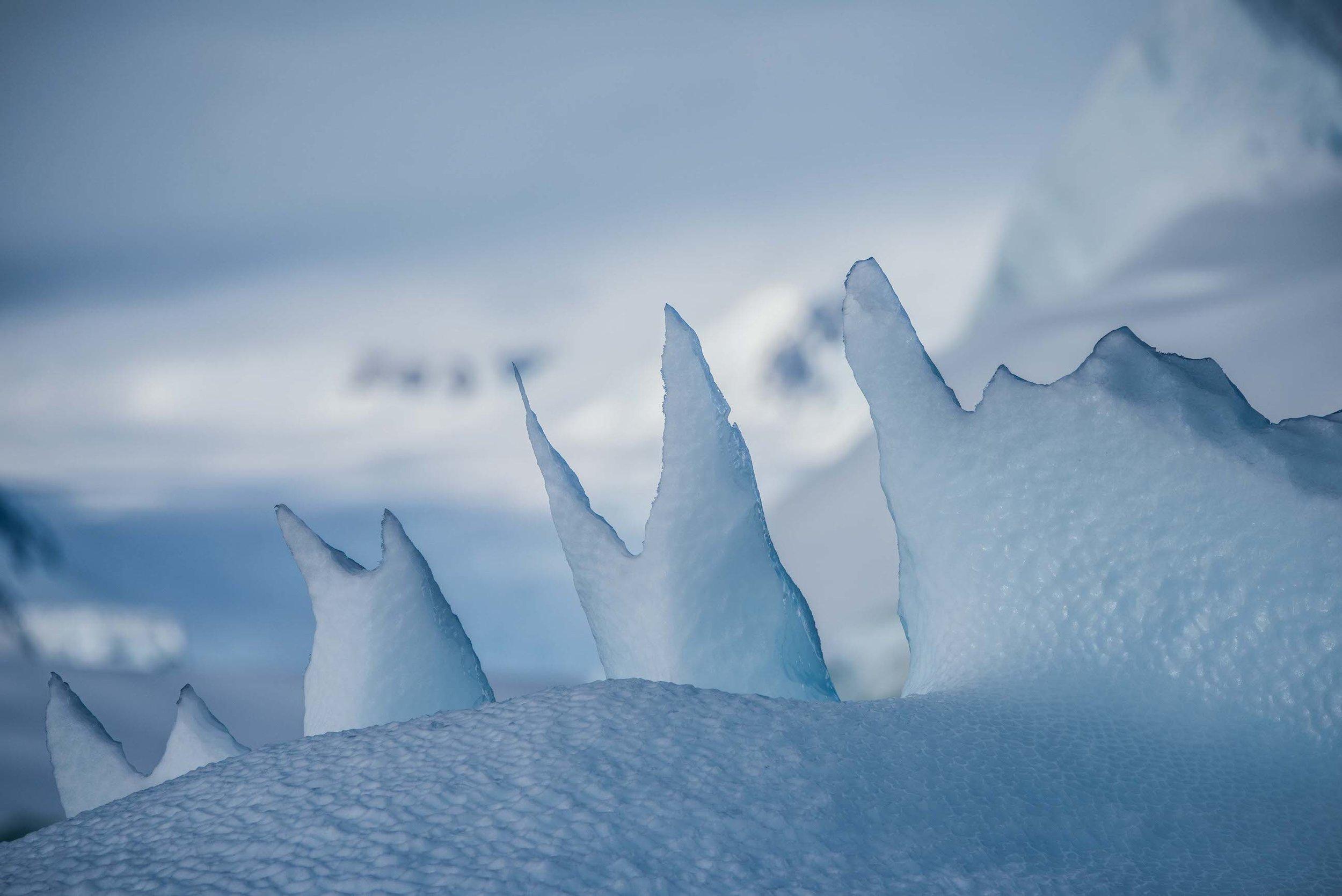 Loveandadventurephotography-Antarctica-711.jpg