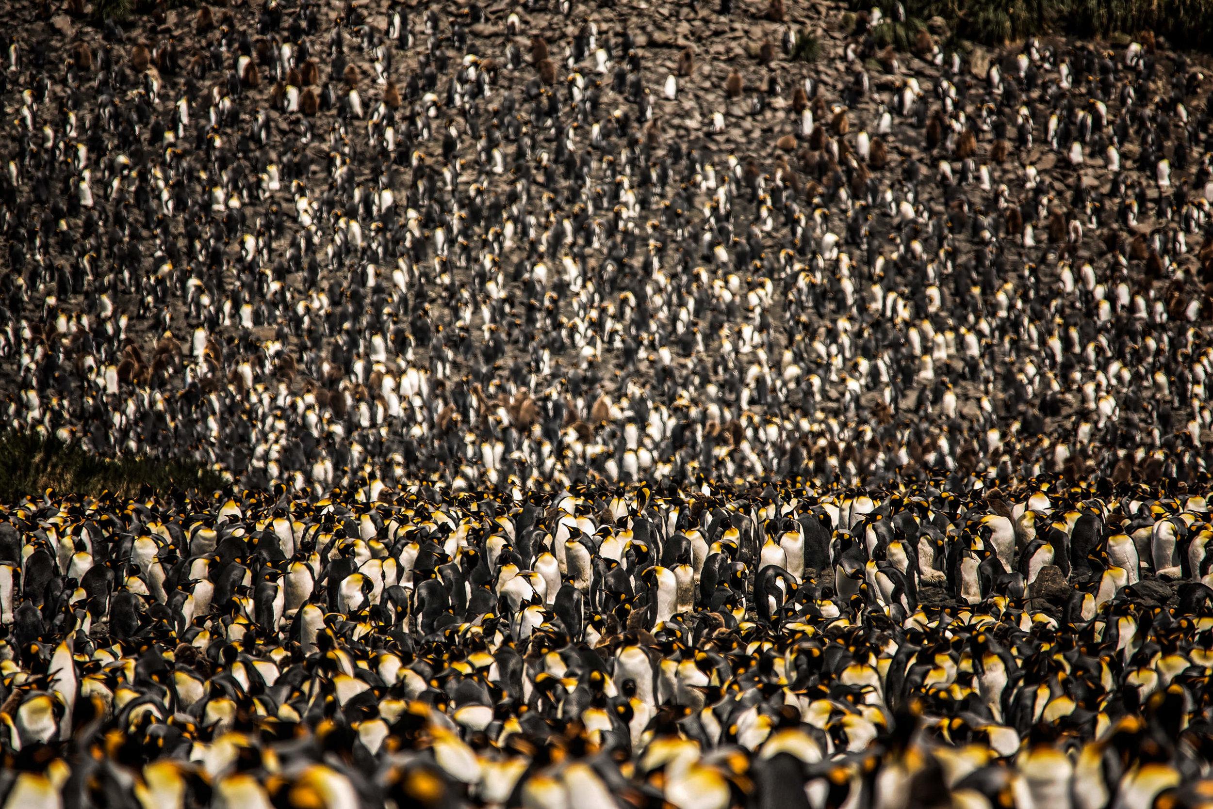 KathleenHertelPhotography-AntarcticaPenguins-88.JPG