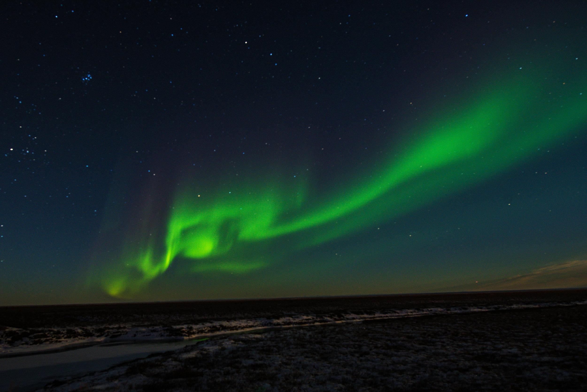 AlaskaPolarBear2015-129.jpg