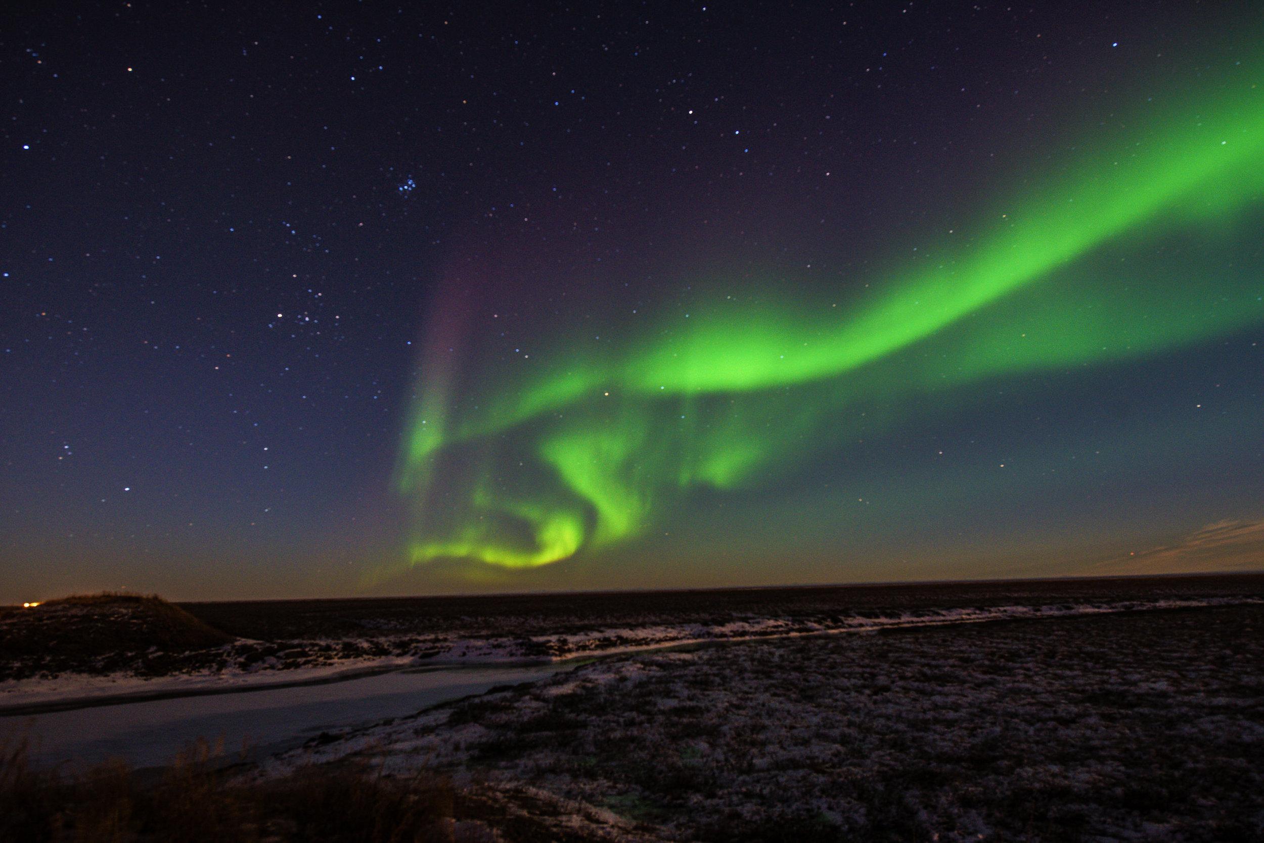 AlaskaPolarBear2015-132.jpg