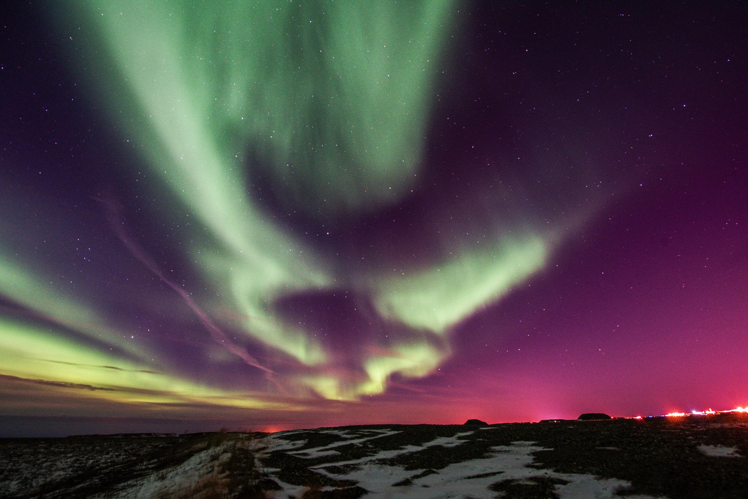 AlaskaPolarBear2015-166.jpg