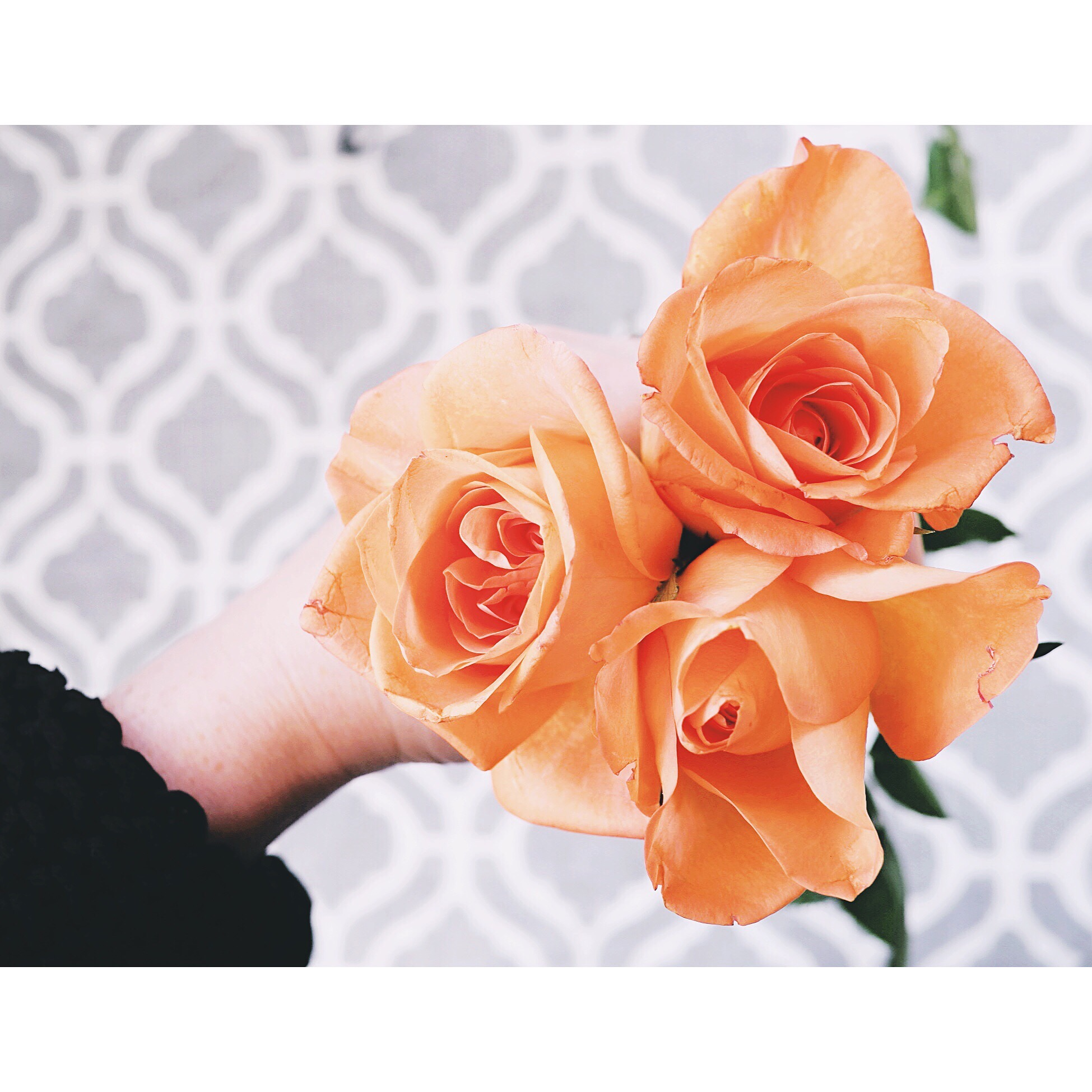 Kate Wainwright |Roses and Rug