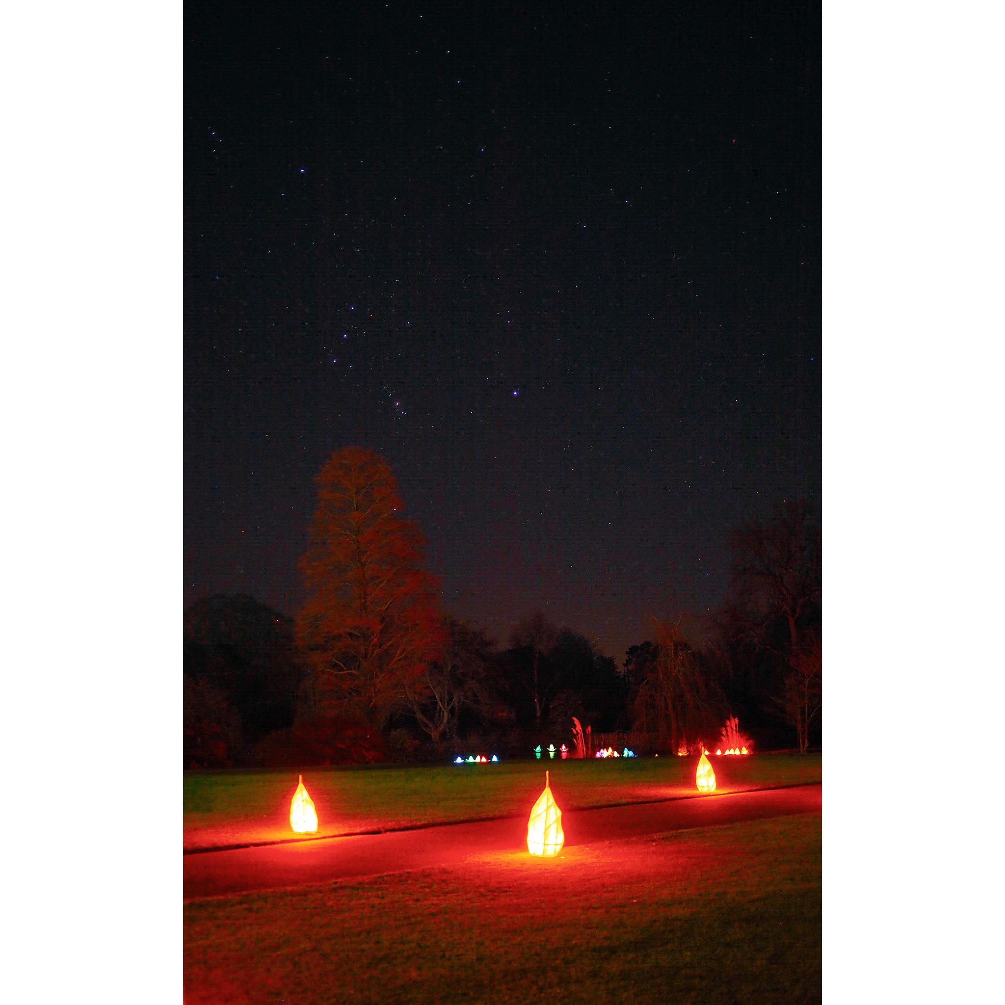 Wakehurst place glow wild