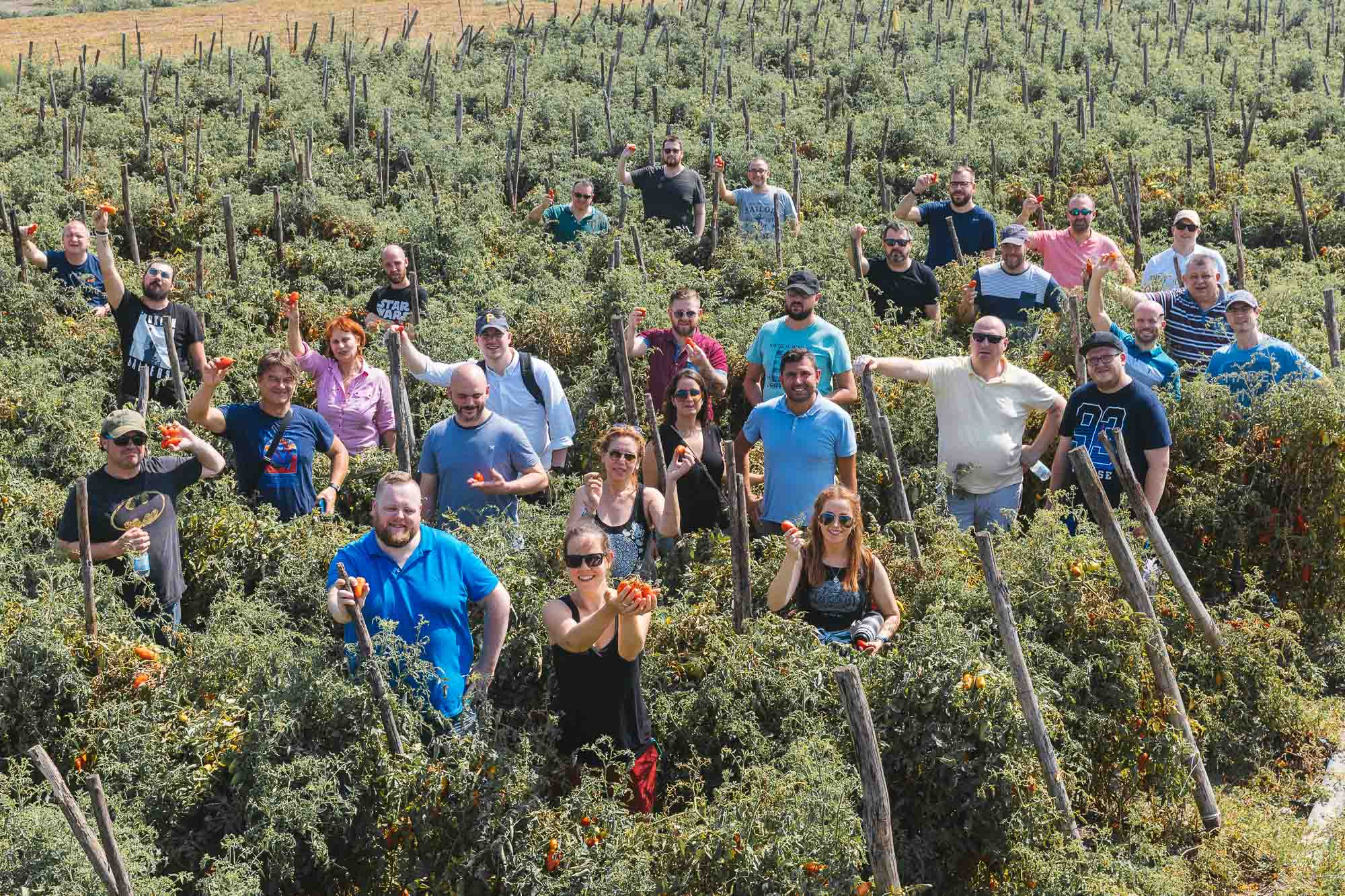 Oakman Inns Chefs amongst the San Marzano DOP tomato vines as part of their visit to Agriconserve Rega in Striano, Naples