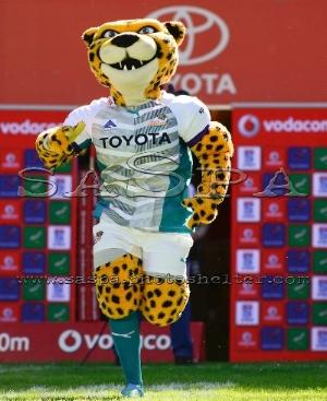 cheetahs mascot.jpg