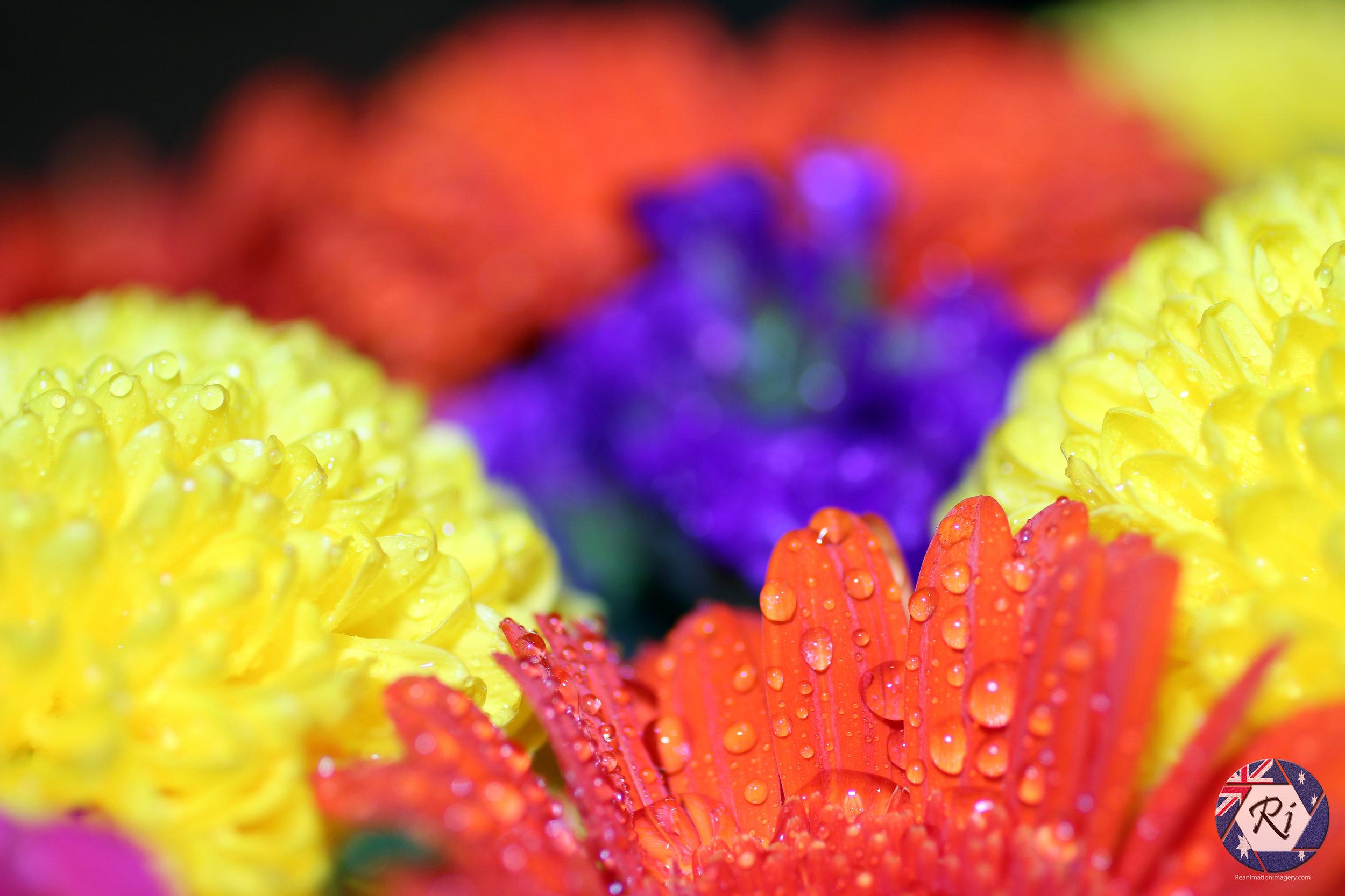 stock-photo-flowers-93438559.jpg