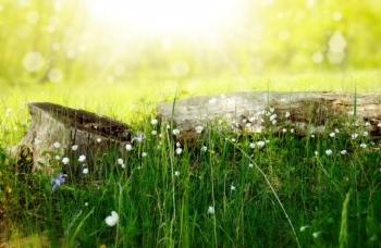 thumbnail_flowers-meadow-wood-forest.jpg