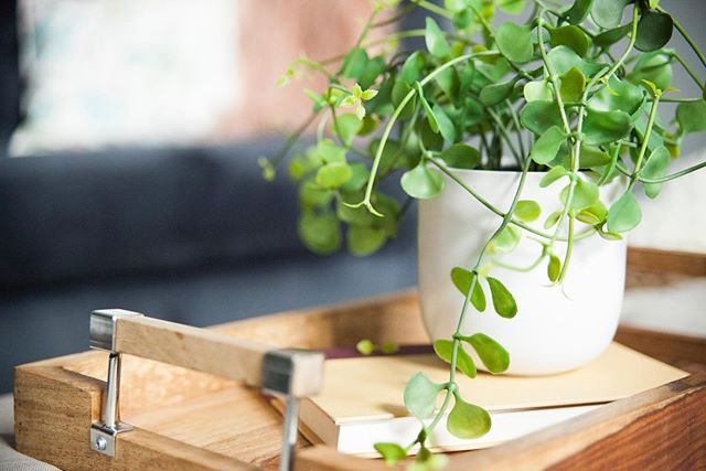 | Greenery Goes a Long Way | Adding pops of greenery does so much to freshen up a space and helps breath life into vacant listings. Let us help you turn your vacant house into a home!