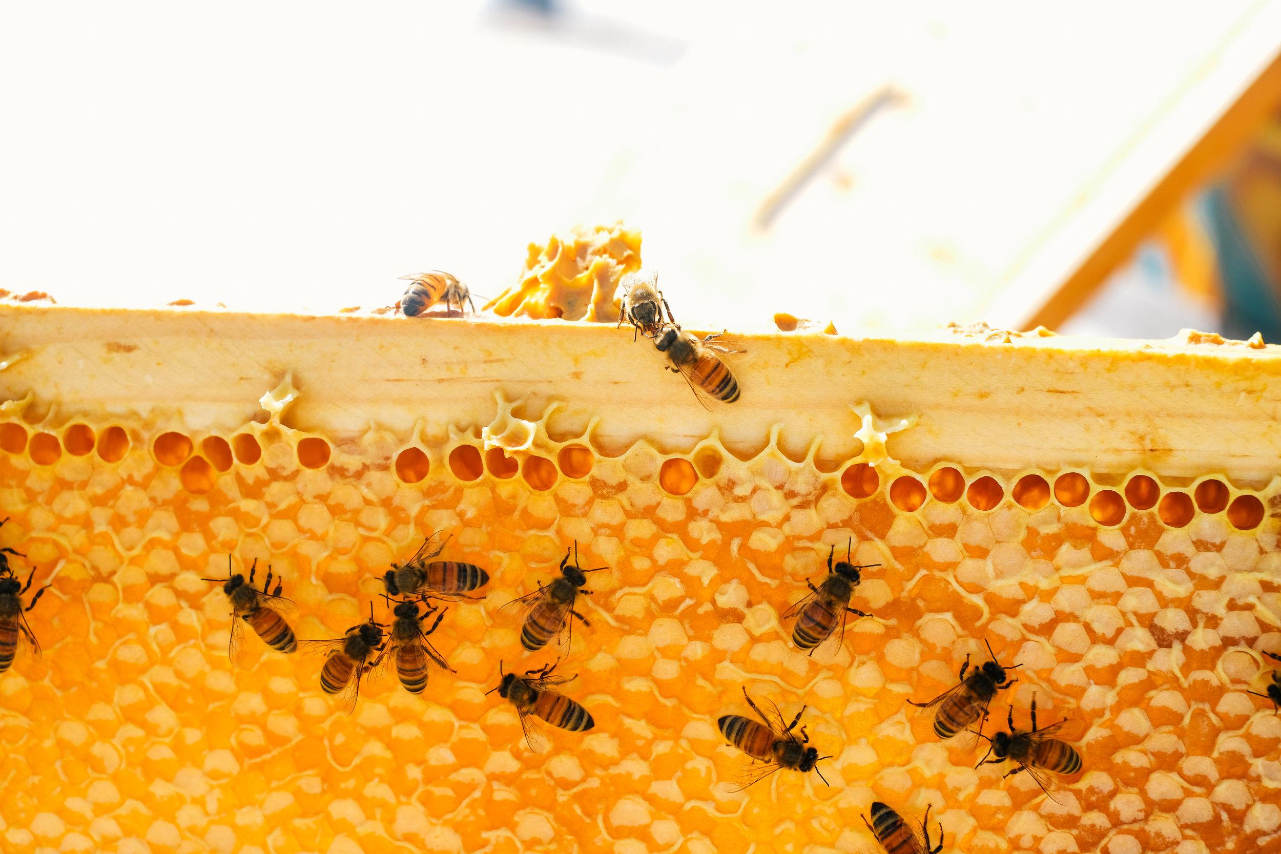 Bees_EmpressGreen-131.jpg