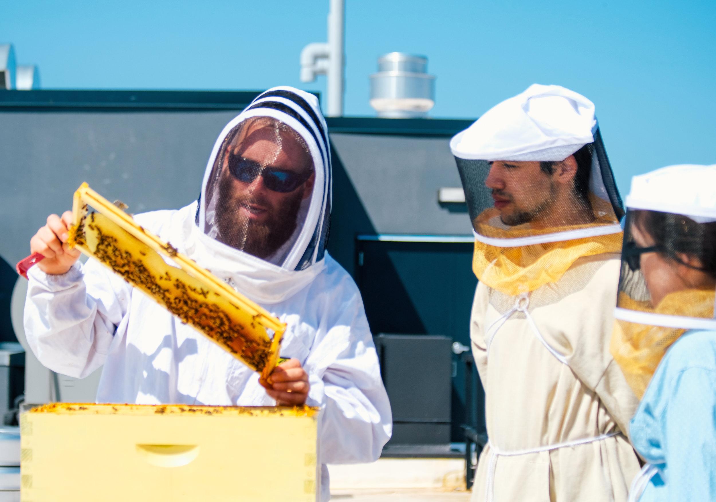 Bees_EmpressGreen-4.jpg