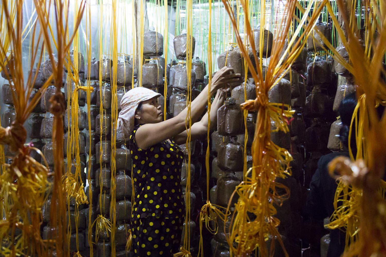 Mushroom farming | Project RENEW |  Vietnam NGO Photographer | Francis Roux Portfolio