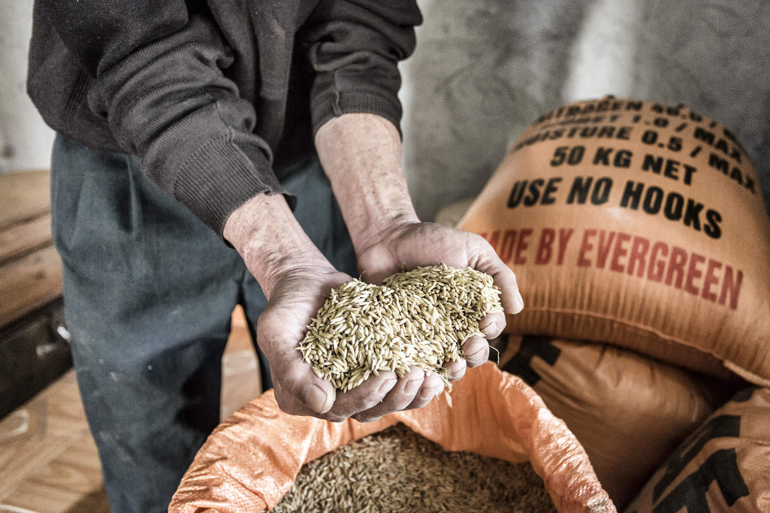 A man holds grains in his hands | Habitat for Humanity | NGO photographer in Vietnam | Francis Roux